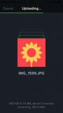 IMG_1631